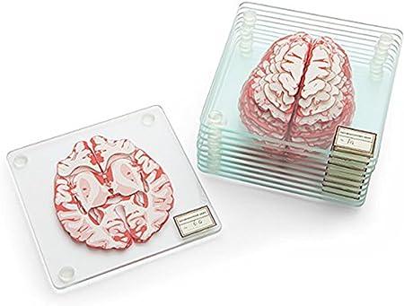 Anatomic Heart Specimen Coasters