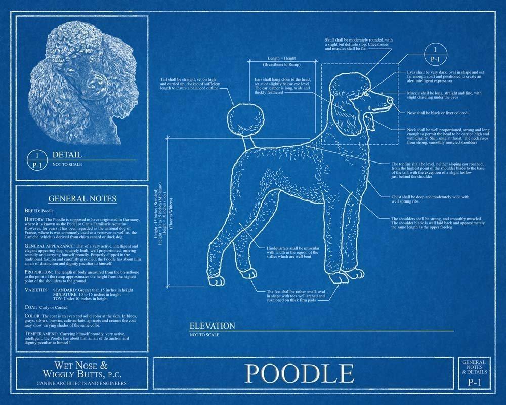Amazon poodle blueprint handmade malvernweather Choice Image