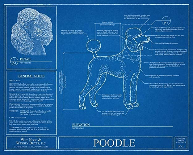 Amazon poodle blueprint handmade poodle blueprint malvernweather Image collections