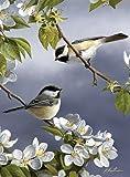 Reeves - Pintar por Números - Set de pintura pequeño, diseño de pájaros