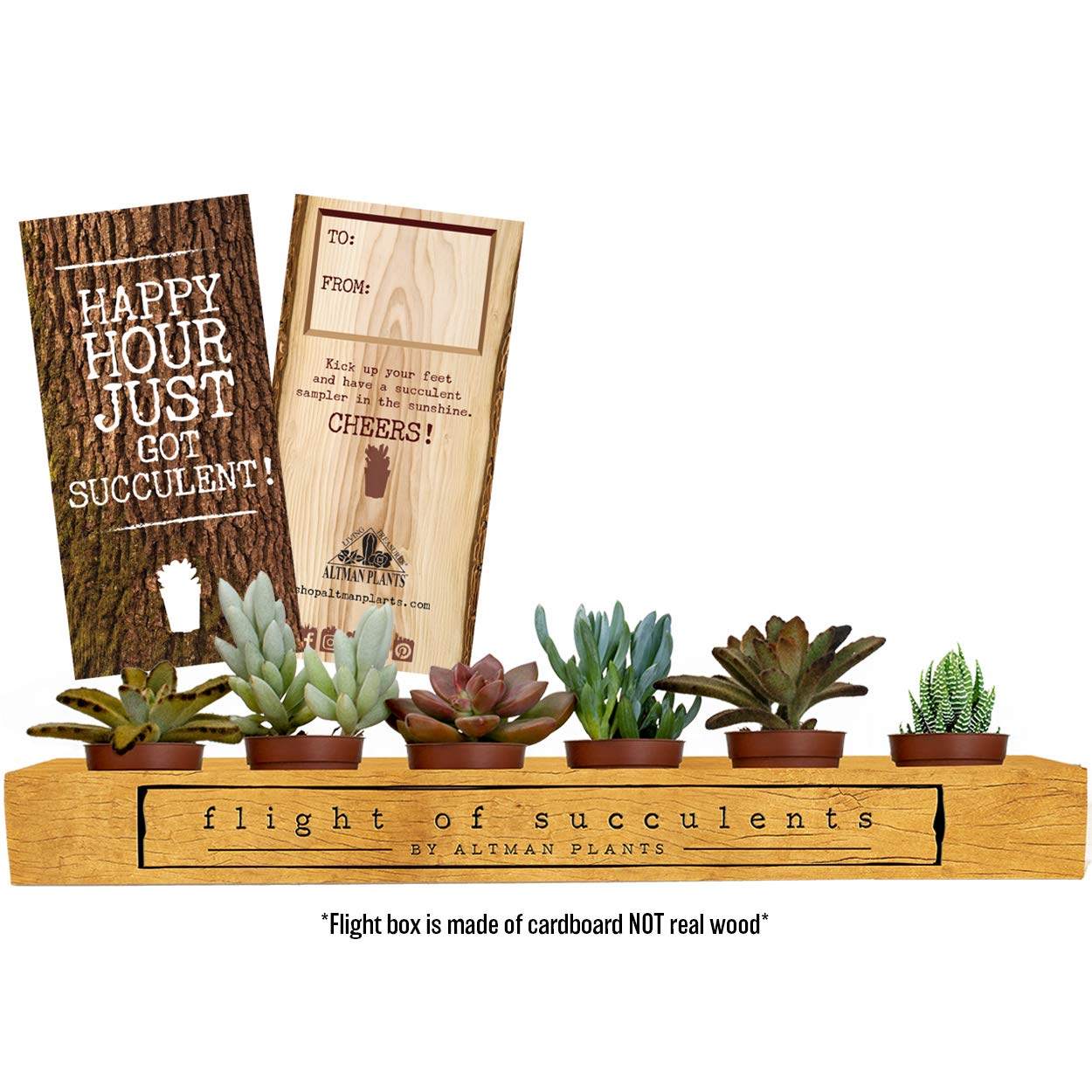 Altman Plants Assorted Mini Live Fully Rooted in Soil Flight of Succulents Perfect Gift for any occasion, Includes (1) To/From Card 1.75'' 6 Pack