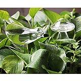winemana 2 Pack Plant Watering Bulbs Glass