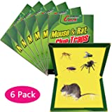 Amazon Com Mouse Glue Trap 5 Pack Extra Large Rat Glue