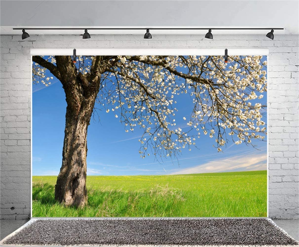 8x6.5ft Beautiful Blossoming Cherry Tree Background Spring Landscape Vinyl Phtography Backdrop Clear Weather Blue Sky Green Meadow Backdrops Wedding Photo Studio Post Card Personal Portraits