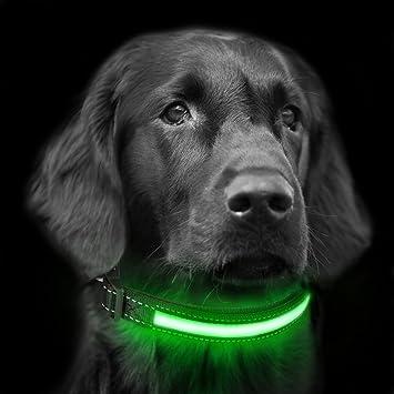 Focuspet Collar LED para Perros, Collar de Collar Luminoso para ...