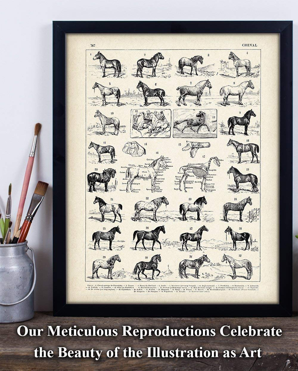 Amazon.com: Vintage French Horses - 11x14 Unframed Art Print ...