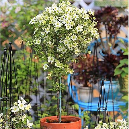 Soporte de Flores esférico Enredadera Enredadera de jardín para ...