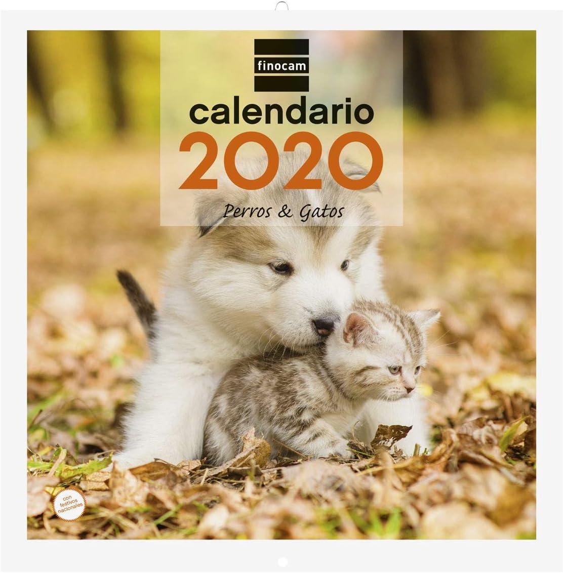 Finocam Imágenes 30x30 Perros y Gatos, Calendario de Pared 2020 Español: Amazon.es: Oficina y papelería