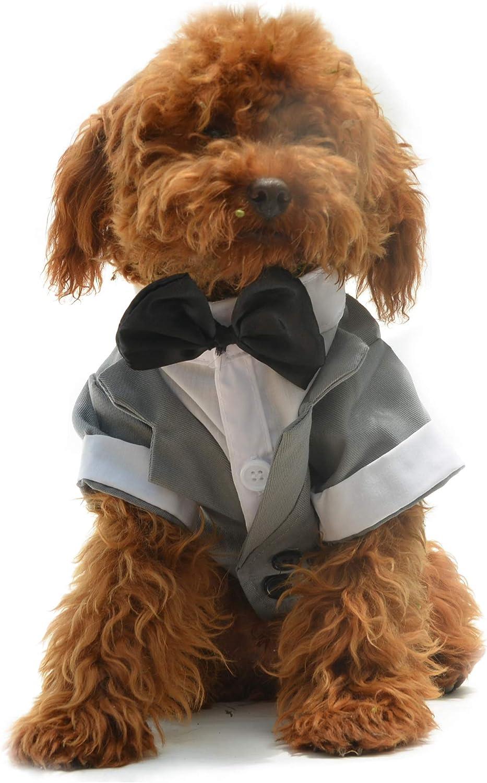 caniche vestido elegante, con esmoking de color gris, pajarita negra
