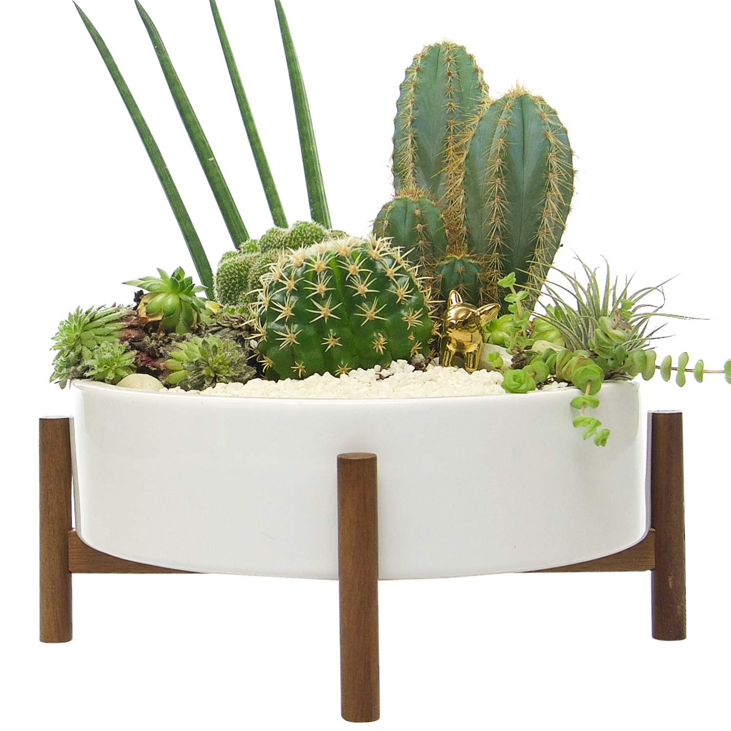 Mid Century Large Round Succulent Planter Bowl | 10 Inch White Ceramic Pot with Wood Stand | Succulent Garden Shallow Pot | Dining Table Centerpiece | Cactus and Plant Container with Drainage | Indoor