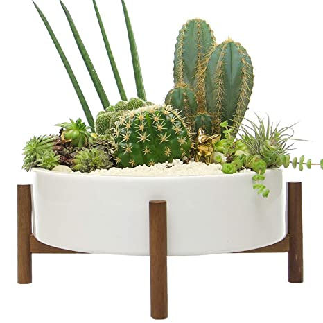 Mid Century Large Round Succulent Planter Bowl, 10 Inch White Ceramic Pot With Wood Stand, Succulent Garden Shallow Pot, Dining Table Centerpiece, Cactus And Plant Container With Drainage, Indoor by Kimisty