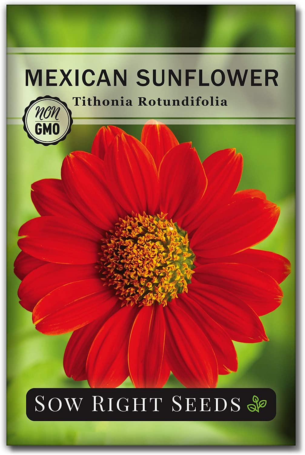 Sow Right Seeds - Mexican Sunflower Seed for Planting- Full Packet with Instructions, Beautiful Non-GMO Heirloom Flower to Plant, Wonderful Gardening Gift (1 Packet)