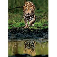 Buffalo Games Allure of The Untamed 500 Piece Jigsaw Puzzle