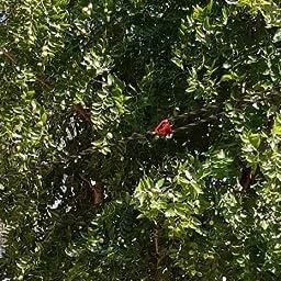 Sekey Toldo Vela de Sombra Cuadrado HDPE Protección Rayos UV Resistente Permeable Transpirable para Patio, Exteriores, Jardín, con Cuerda, 3.6×3.6m Taupe: Amazon.es: Jardín