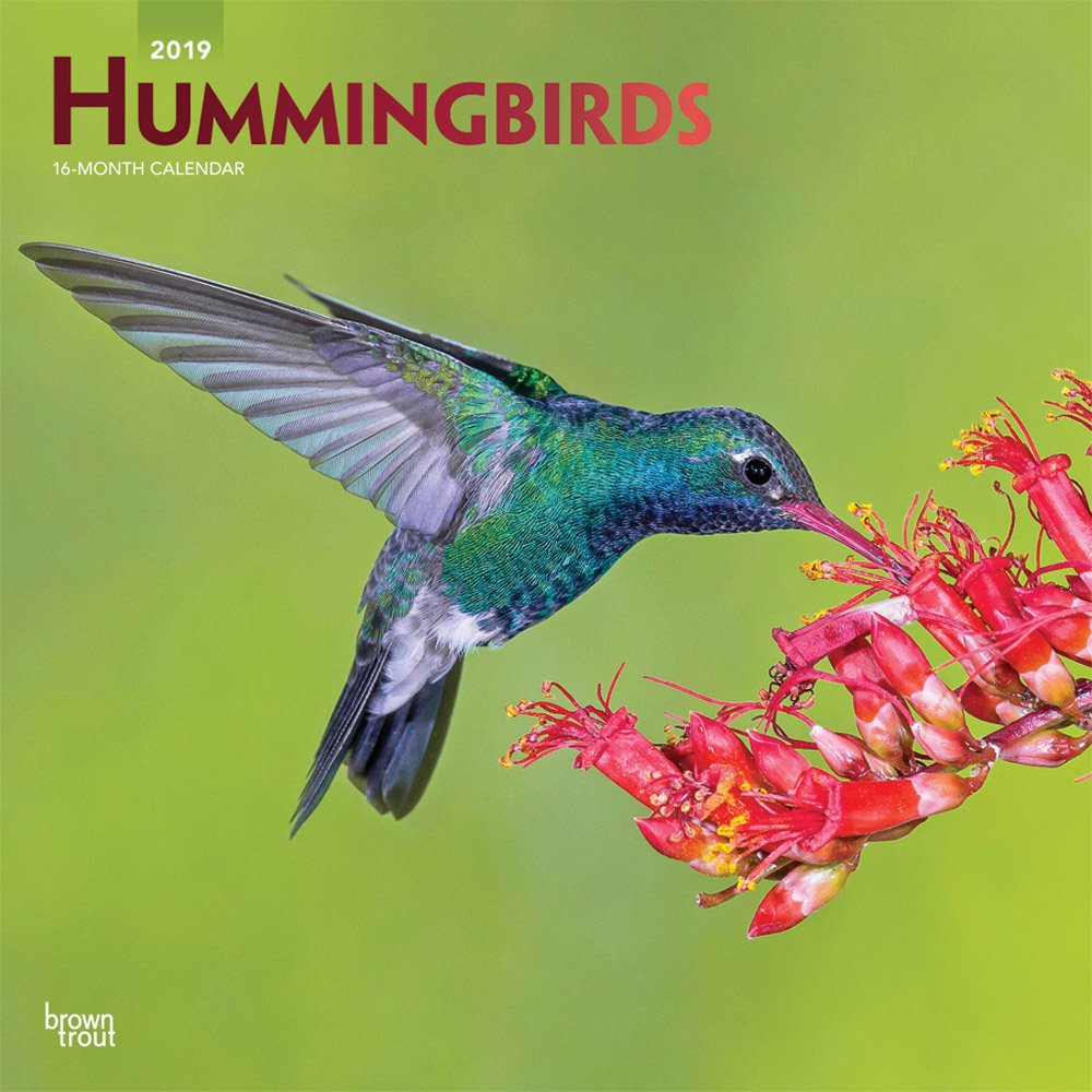 Hummingbirds 2019 12 x 12 Inch Monthly Square Wall Calendar with Foil Stamped Cover, Animals Wildlife Birds (Multilingual Edition) by BrownTrout Publishers