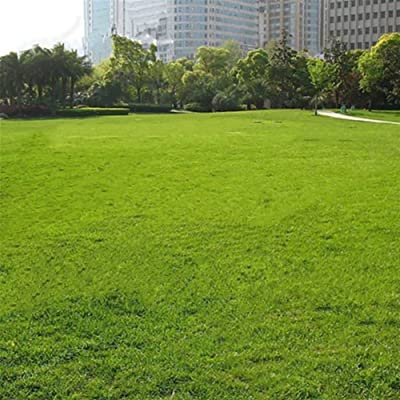 lEIsr00y 500Pcs Grass Seeds Lawn Perennial Garden Soccer Court Field Villa Outdoor Plant - Green Grass Seeds Easy to Grow, Garden Decor, Perennial : Garden & Outdoor