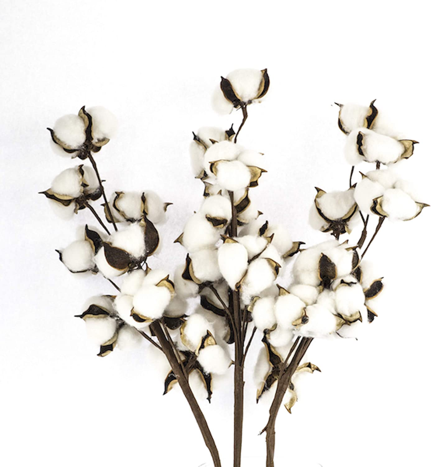 Antea Decor Cotton Stems 6 Pack - Rustic Cotton Flowers - Perfect for Farmhouse Summer Decor - 10 Balls Per Stem - 21 Inches