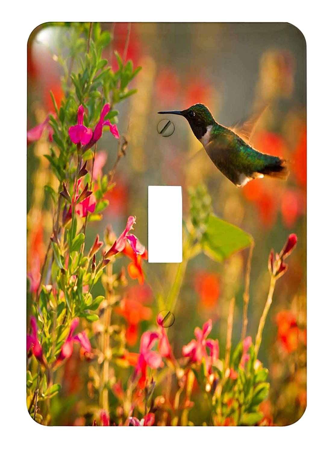 Texas Usa Single Toggle Switch 3dRose lsp/_191430/_1Rubythroated Hummingbird In Flower Garden At Sunrise