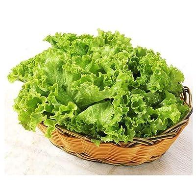 Determina Garden - Fast - Growing Lettuce Seeds, 100PCS Organic Lettuce Plants for Planting Sweet Salad Lettuce: Clothing