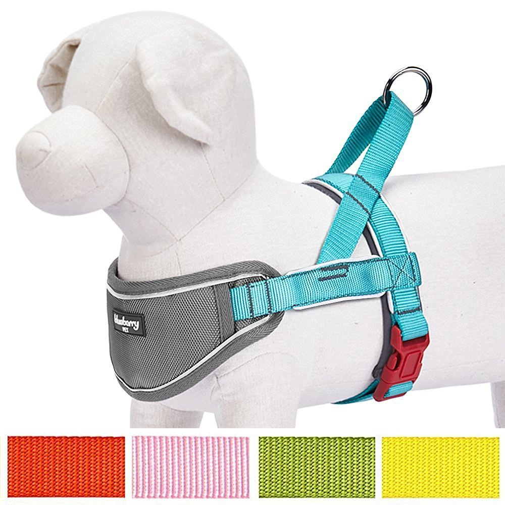 Blueberry Pet 5 Colors Soft & Comfortable 3M Reflective Strips Nylon Neoprene