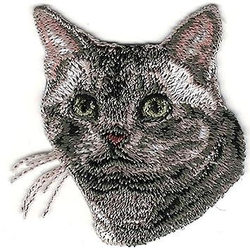 American Shorthair Cat Breeds