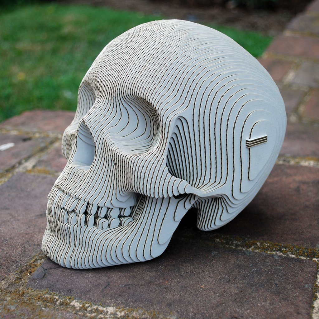 Amazon.com: Vince Cardboard Human Skull (White, Large): Home & Kitchen