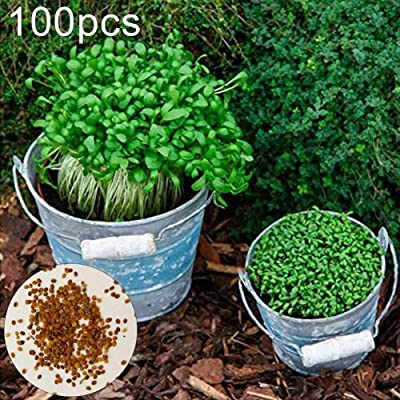 hudiemm0B Cress Seeds, 100Pcs Watercress Cress Seeds Home Garden Patio Fresh Vegetable Planting Cress Seeds: Sports & Outdoors