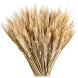 GTIDEA Large Golden Dried Natural Wheat Sheave Bundle Premium Fall Arrangements Full Wholesale DIY Home Kitchen Table Wedding Centerpieces Decorative