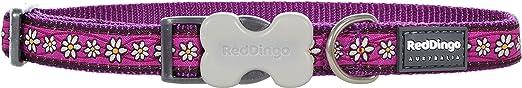 Red Dingo DC-DC-PU-20 Daisy Chain Purple Dog Collar, Medium/Large/20mm