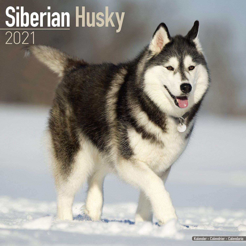 Amazon Com Siberian Husky Calendar 2021 Dog Breed Calendar Wall Calendar 2020 2021 Office Products