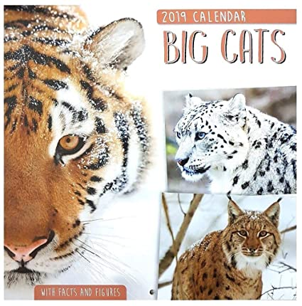 2019 Animals Wildlife - Calendario de pared cuadrado para gatos grandes en forma de oso de tigre de león, diseño de pájaros: Amazon.es: Oficina y papelería