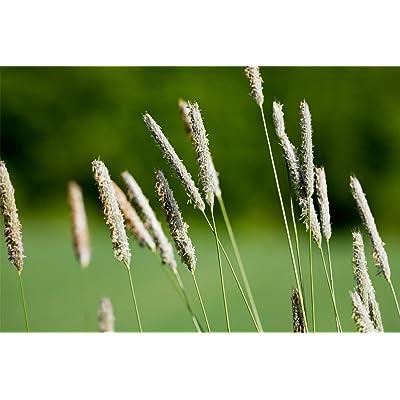 Timothy (10 LBS) : Garden & Outdoor