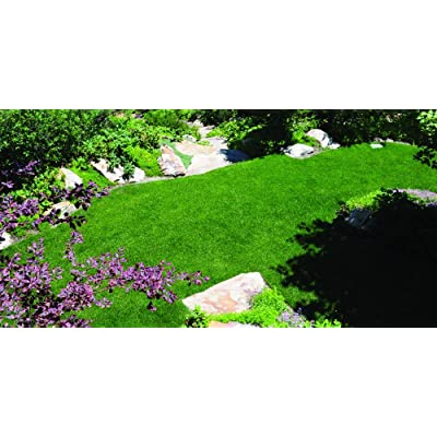Nature's Seed TURF-BR-500-F Blue Ribbon Blend, 500 sq.' : Garden & Outdoor