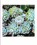 Succulent Garden Notecards: 20 Different Cards