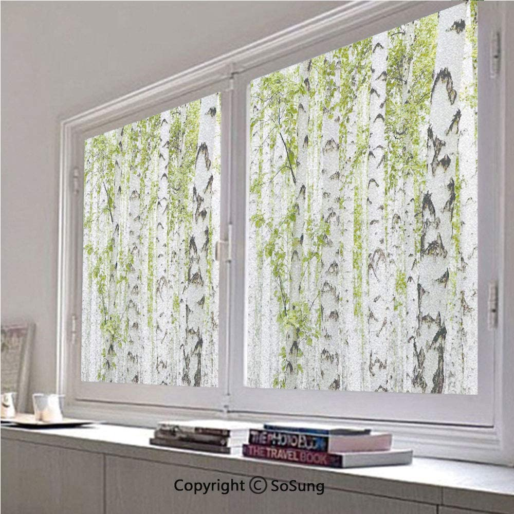 30x48 inch Window Privacy Film,Birch Trees in The Forest Summertime Wildlife Nature Themed Decorating Picture Non-Adhesive Static Cling Frosted Window Film,Window Stickers for Kids Home Office
