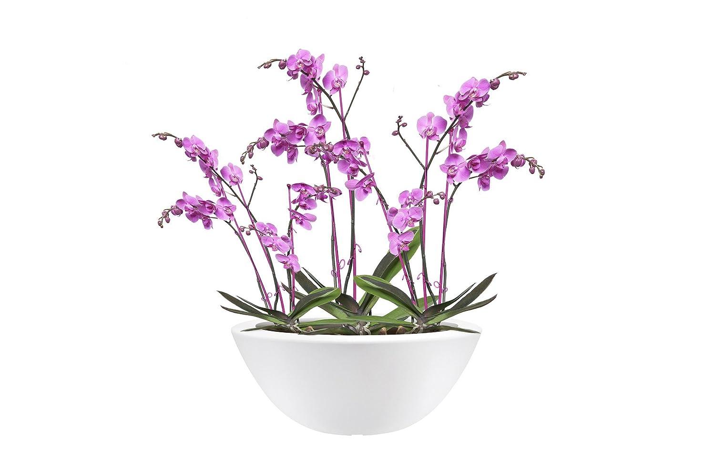 Scheurich Fioriera MIRROR SILVER VASO 15 cm fiori vaso vaso vaso giardino