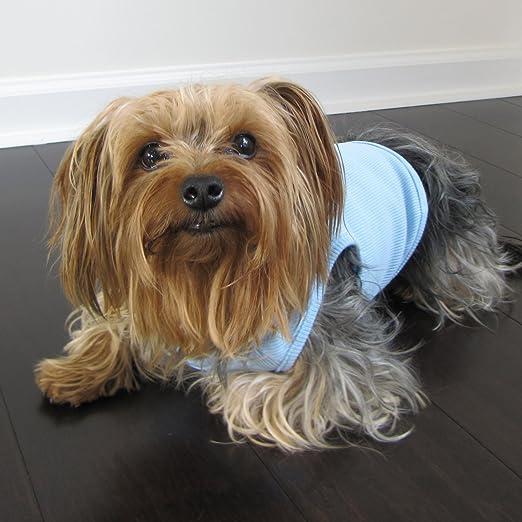 Fresh azul perro camisa XS: Amazon.es: Productos para mascotas
