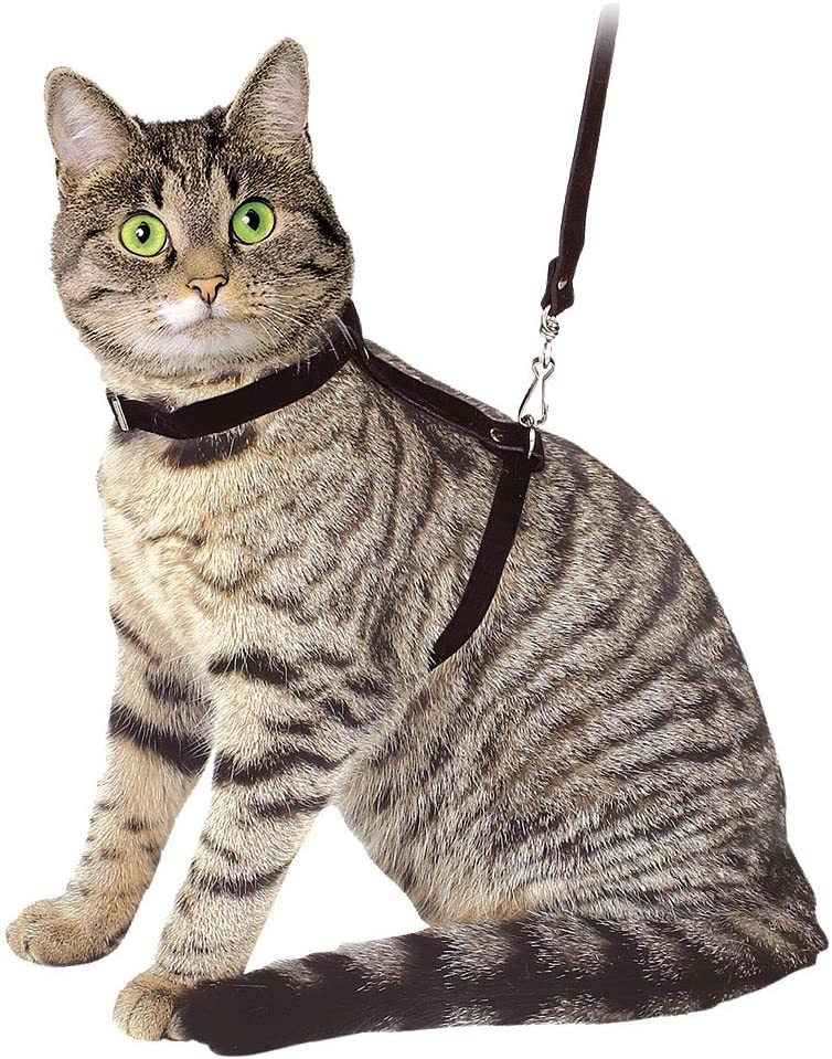 Arnés para gatos con correa 120 cm, negro, de ante: Amazon.es ...