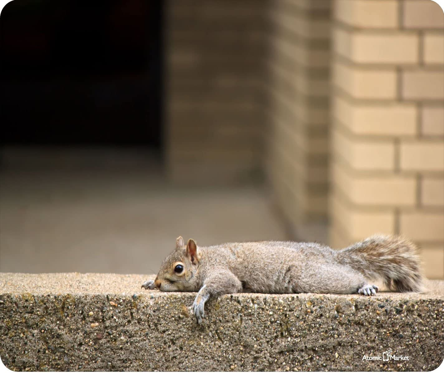 Squirrel Just Laying Around Funny Thick Mouse Pad by Atomic Market