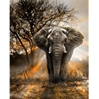 Blxecky 5D DIY Diamond Painting ,By Number Kits Crafts & Sewing Cross Stitch,Wall stickers for living room decoration,Elephant(35X43CM/14X17inch)