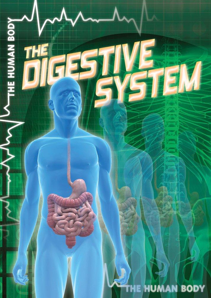 The Digestive System The Human Body John M Md Shea