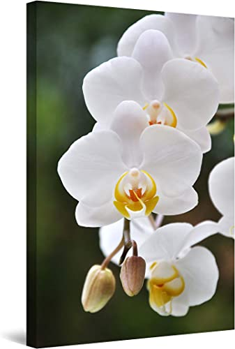 Startonight Wall Art Canvas White Orchid