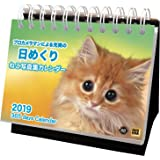 アクティブコーポレーション 2019年 猫 カレンダー 日めくり 卓上 ねこ写真集 ACL-576 (2019年 1月始まり)