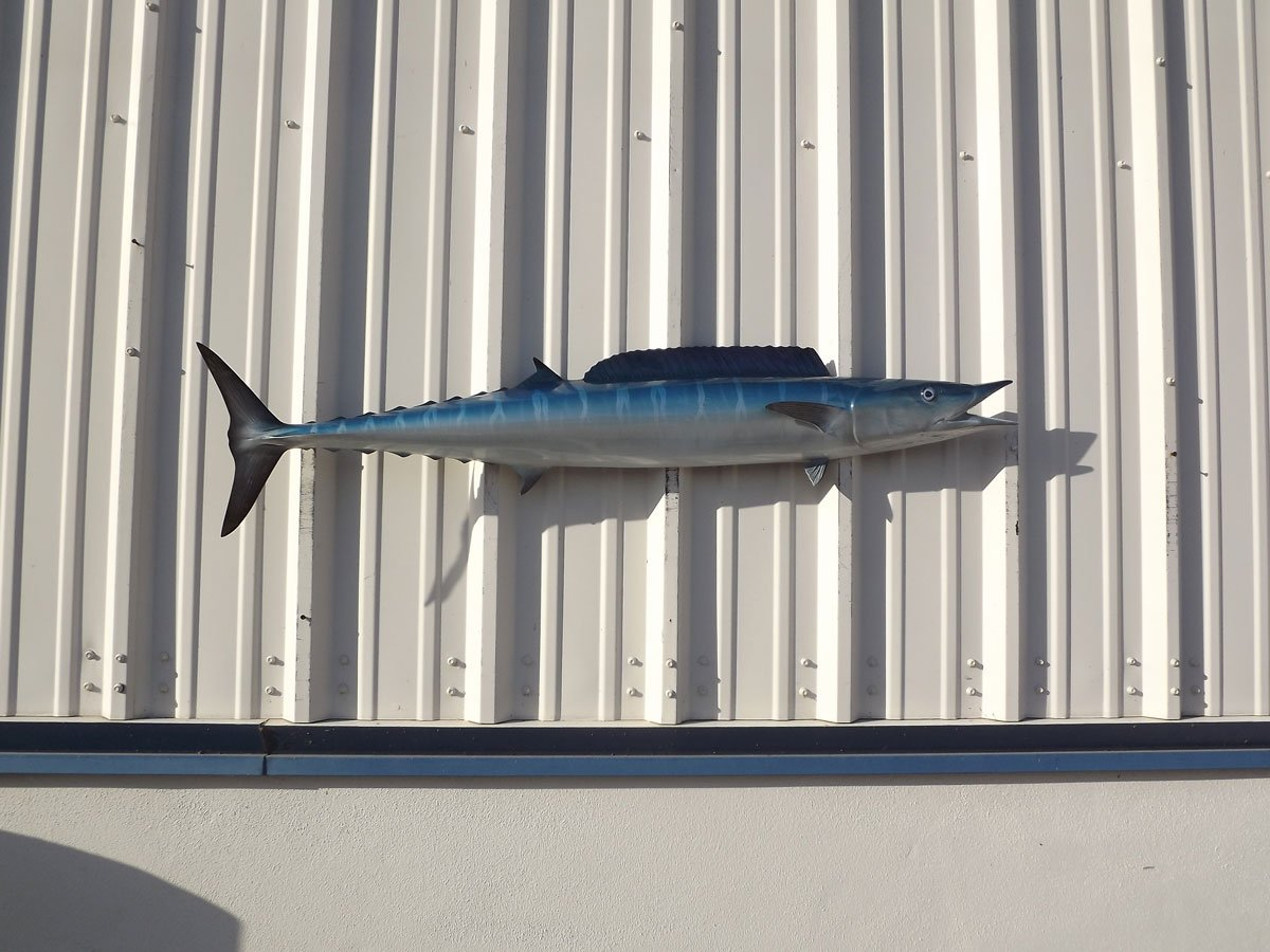 53'' Wahoo Half Sided Fish Mount Replica, Affordable Coastal Decor - Indoors Or Outside.