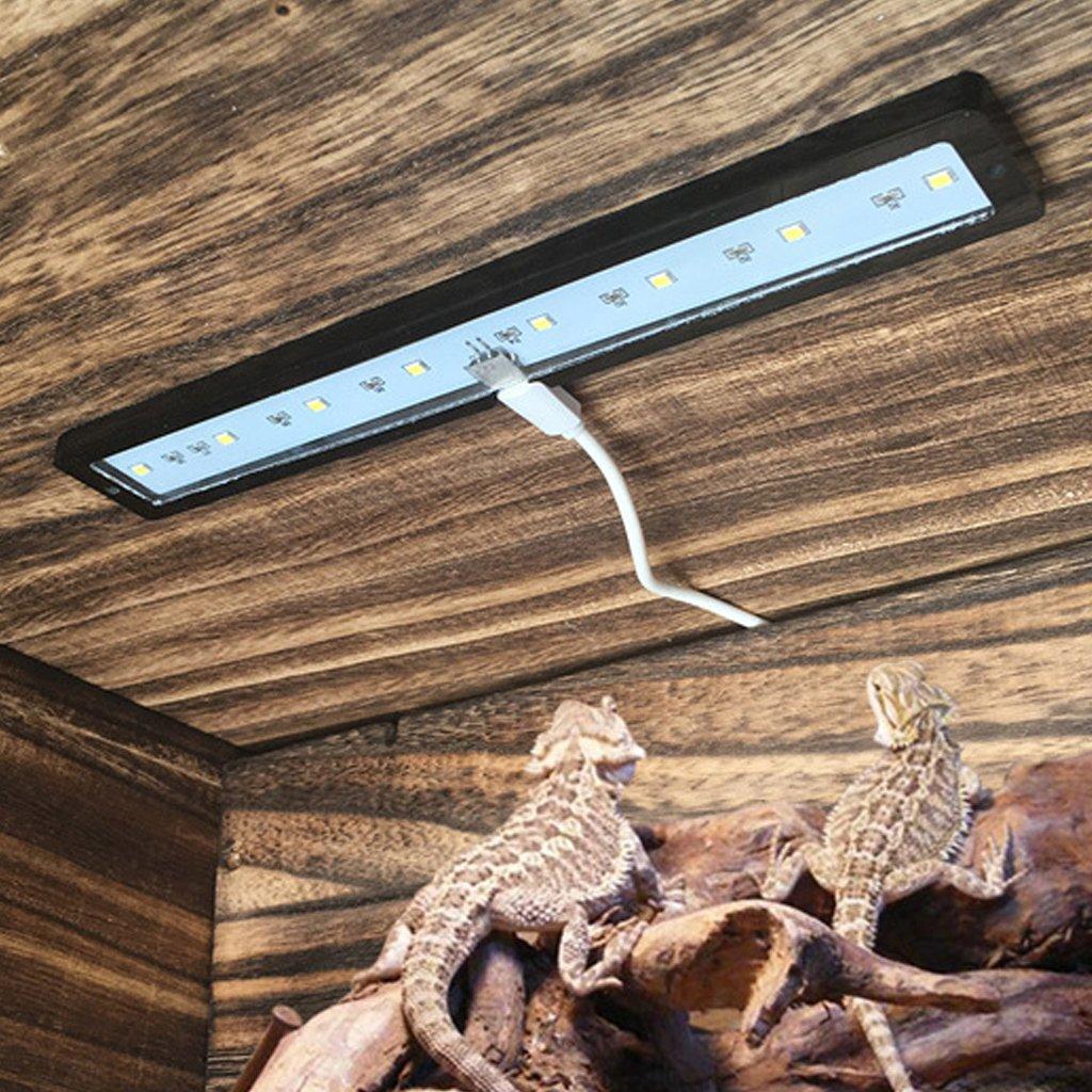 ZOUCY Fish Tank Lamp Luces Naturales Carcasa USB Carga de Acuario Reptil Estuche: Amazon.es: Hogar