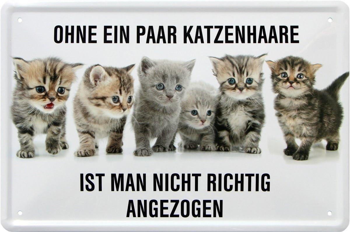 Unbekannt Rahmenlos Plaque m/étallique Humoristique avec Inscription en Allemand Katzenhaare Nicht Richtig angezogen Katze 20x30 34