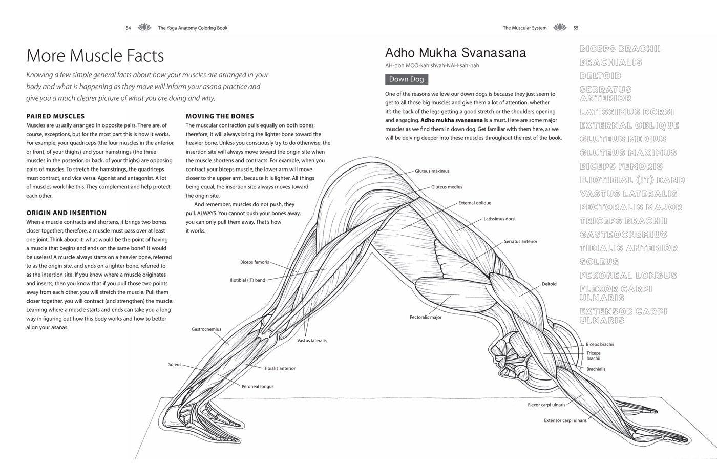 - Solloway, K: Yoga Anatomy Coloring Book The Yoga Anatomy Coloring