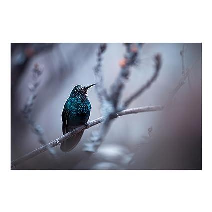Bilderwelten Fotomural Colibri En Invierno Mural Apaisado Papel