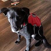 Amazon.com: RUFFWEAR - Arnés para perros Web Master Pro ...