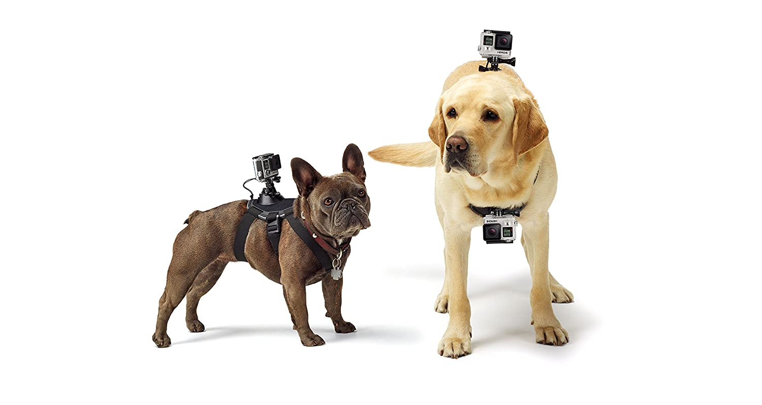 GoPro dog Fetch Collar Camera on Amazon